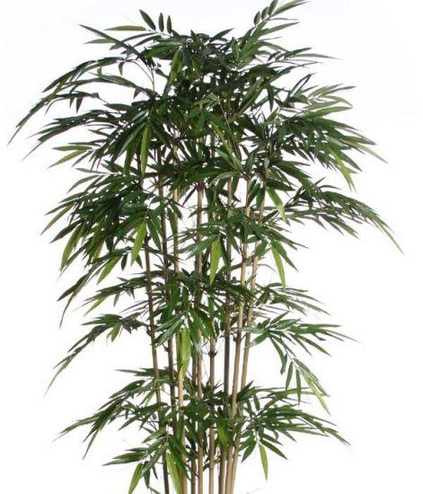 bambusz,egészsége,szerencse,karrier,pénz